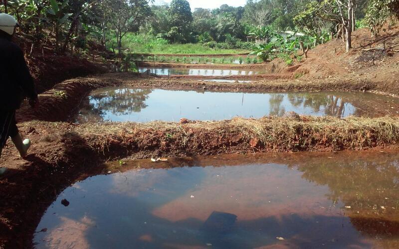Pisciculture-batcha13