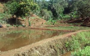Pisciculture-batcha12